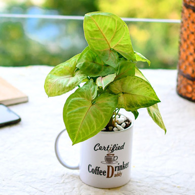Coffee cup and Plants