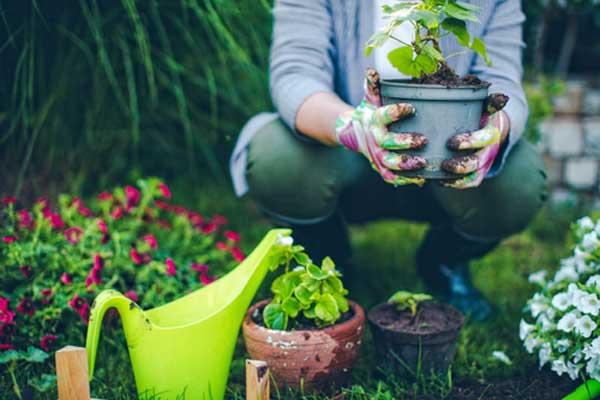 Kitchen Gardening