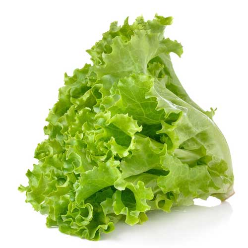 Vegetable Seeds : Lettuce