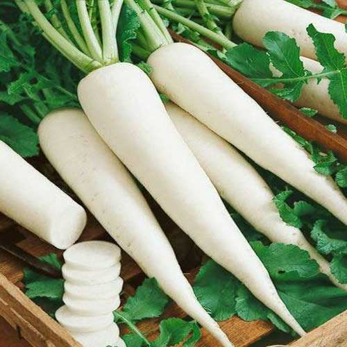 Vegetable Seeds : Radish white