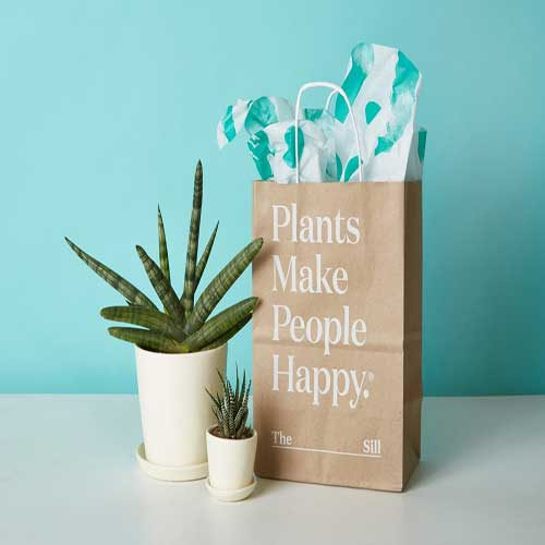 Indoor Plants : Good day gifts