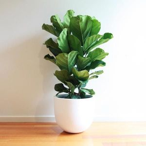 Top 5 Air Purifying Indoor Plants Recommended By NASA