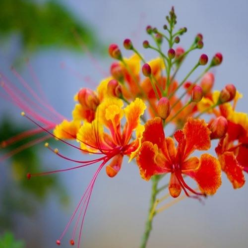 Plants : Flowering Plants