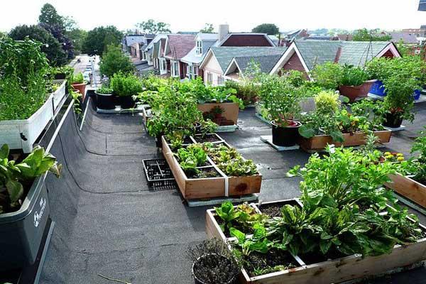 Rooftop Kitchen Gardening