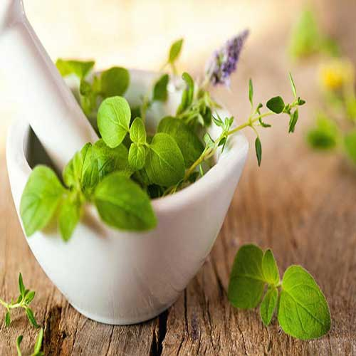 Medicinal Plants : Desi Native Herbs