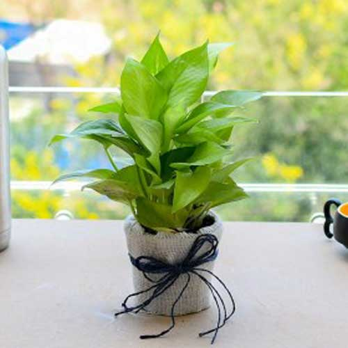 Indoor Plants : All green gifts