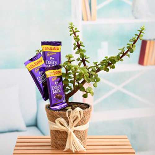 Indoor Plants : Corporate Gifts