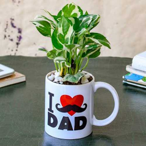 Indoor Plants : Gifts for Parents