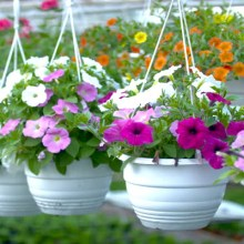 Plants : Plantscaping